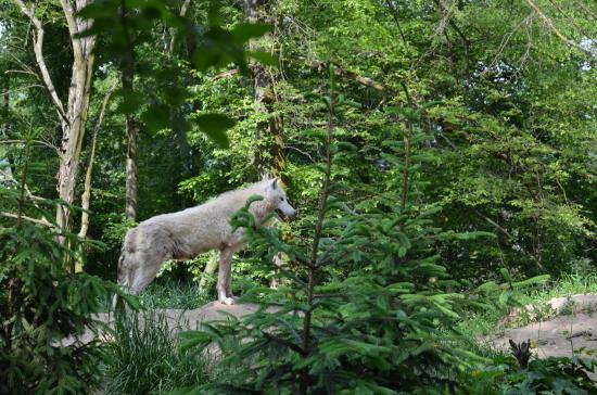 Brno, República Checa: vlk
