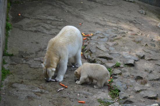 Brno, República Checa: lední medvědi