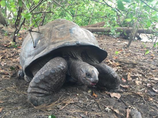 Остров Праслен, Сейшельские острова: Tortue terrestre