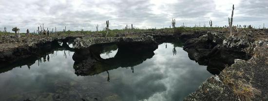 Puerto Villamil, Ecuador: IMG-20160526-WA0035_large.jpg