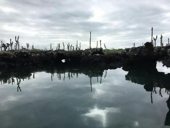 Puerto Villamil, Ecuador: IMG-20160527-WA0008_large.jpg