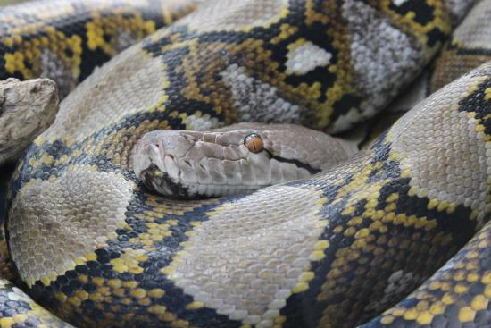 Kinyonga Reptile Center