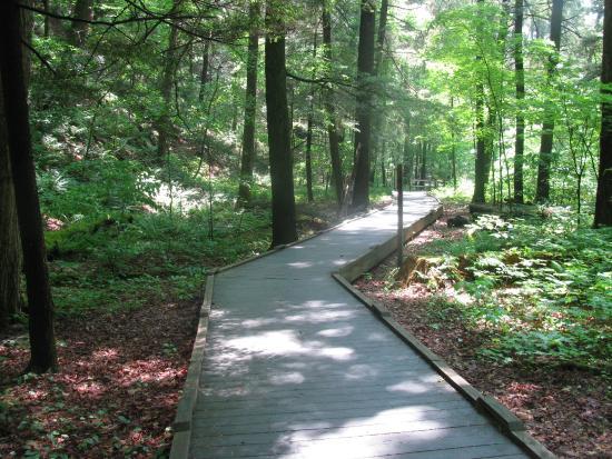 Dingmans Ferry, PA: The walking trail
