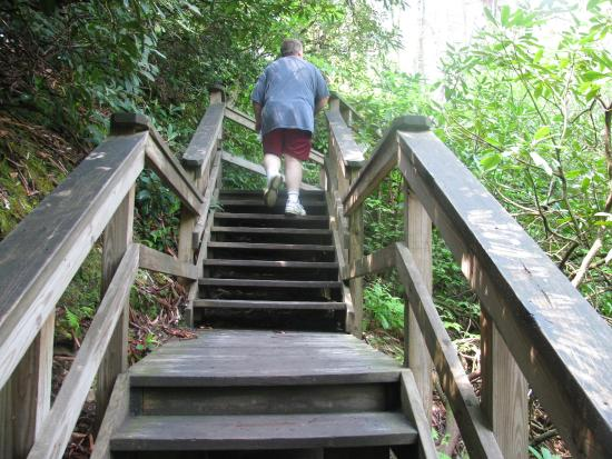 Dingmans Ferry, PA: More of the steps