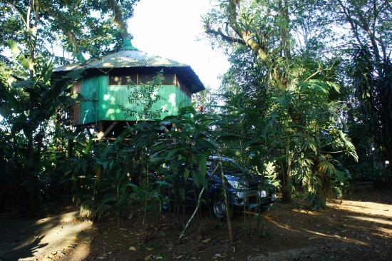 Posada Andrea Cristina: Chambre dans les arbres