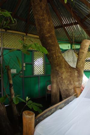 Posada Andrea Cristina: Tronc d'arbre passant au milieu de la chambre