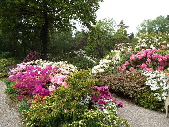 Mesmerizing Rhododendron Flowering Now March  Picture Of Lea Gardens  With Great Lea Gardens Lea Rhododendron Gardens  Th May  With Astounding Fire Garden Suite Also Garden Propagator In Addition The Garden Room And How To Garden Vegetables As Well As Windowsill Garden Additionally Plastic Garden Gnomes From Tripadvisorcouk With   Great Rhododendron Flowering Now March  Picture Of Lea Gardens  With Astounding Lea Gardens Lea Rhododendron Gardens  Th May  And Mesmerizing Fire Garden Suite Also Garden Propagator In Addition The Garden Room From Tripadvisorcouk
