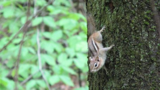 West Chesterfield, NH: Wildlife is abundant!
