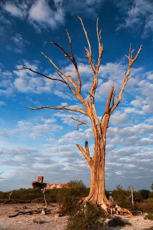 Miramar, Argentina: Viejo arbol al atardecer