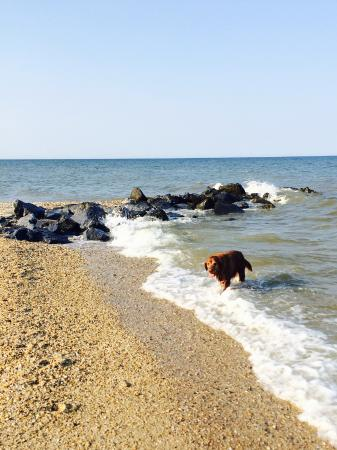Scotland, MD: Pet friendly beach