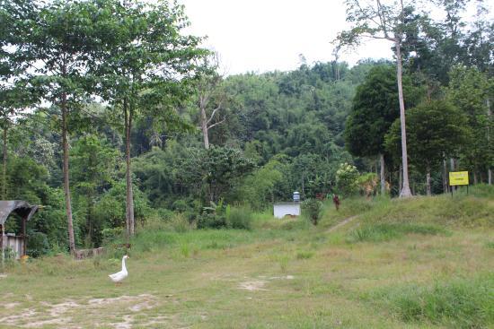 Foto de Kampung Jelebu