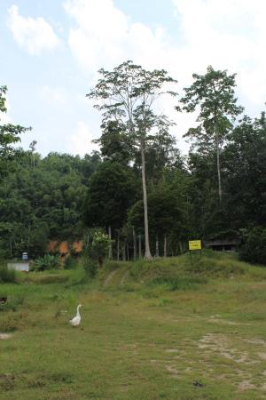 Kampung Jelebu 사진
