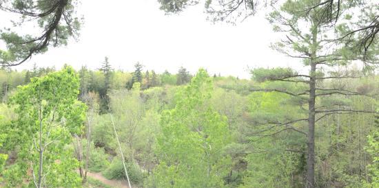 TreeGO - Moncton Photo