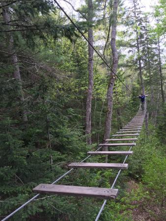 TreeGO - Moncton: photo3.jpg
