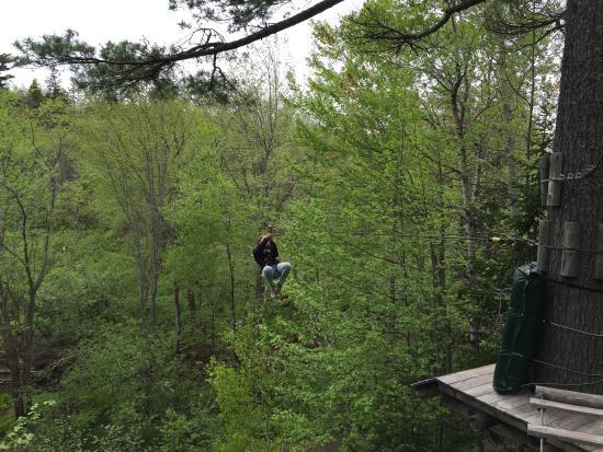 TreeGO - Moncton: photo4.jpg