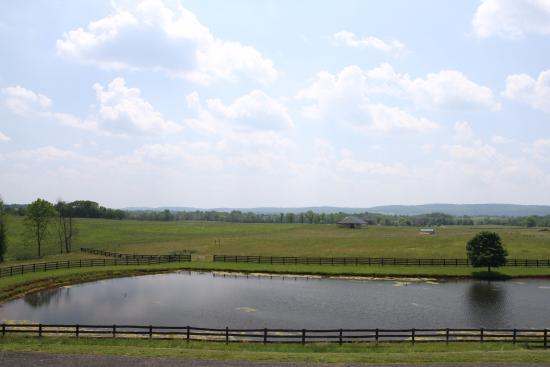Leesburg, Βιρτζίνια: The large pond on the property