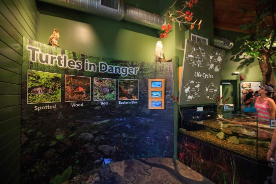 Meigs Point Nature Center : In the Woods/Reptile