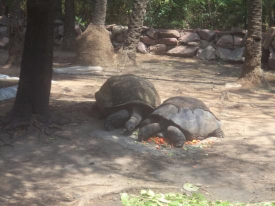 Tortoise Picture Of Nehru Zoological Park Hyderabad Tripadvisor