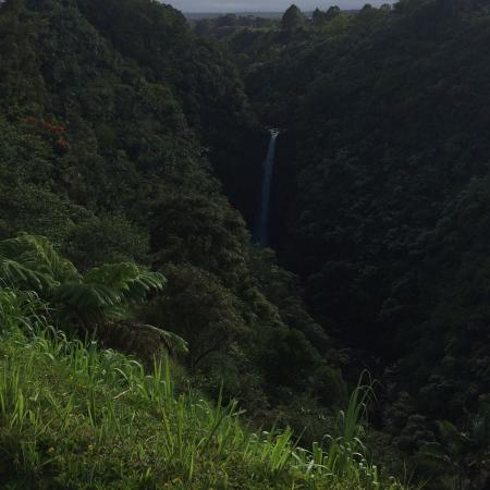 Skyline Eco Adventures - Akaka Falls: photo3.jpg