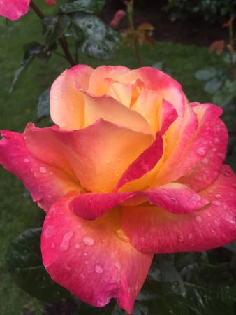 International Rose Test Garden The Is Absolutely A Must See