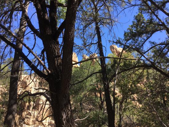 Cochise Stronghold: Lots of pine trees but not much shade
