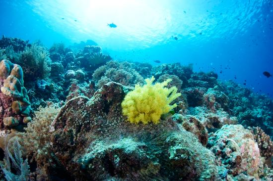 Indonesia: Bunaken Underwater