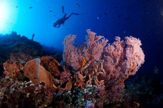 Bunaken Island, إندونيسيا: Bunaken Underwater