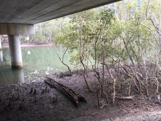 ‪Coffs Creek Walk and Cycleway‬