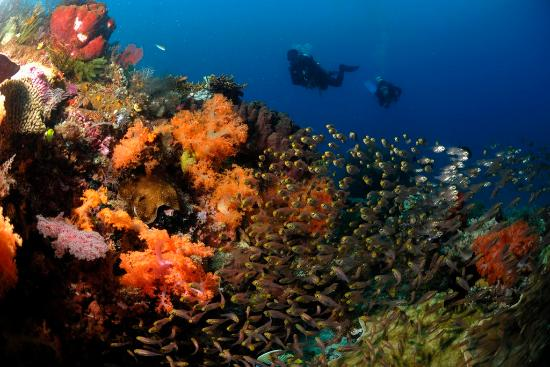 Indonésie : Raja Ampat Underwater, West Papua