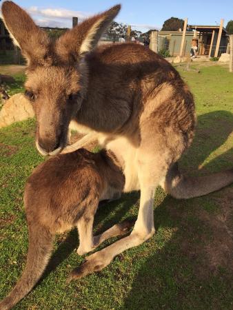 カウズ, オーストラリア, photo0.jpg