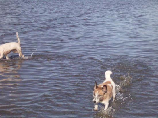 Hervey Bay, Austrália: dog friendly beaches