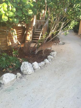 Little Palm Island Resort & Spa, A Noble House Resort: photo8.jpg