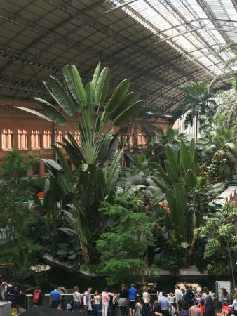Vue du jardin tropical picture of estacion de atocha madrid tripadvisor - Jardin tropical atocha ...