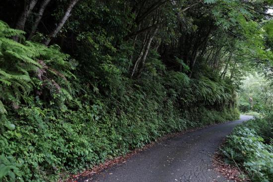Kochi Prefecture, اليابان: 滴るような緑 細い道もあります