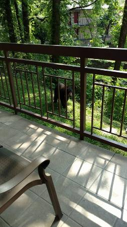 Greystone Lodge On the River: It's a bear...