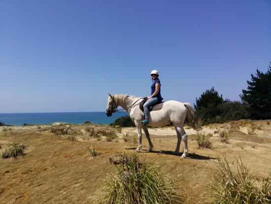 写真Pakiri Beach Horse Rides - Day Tours枚