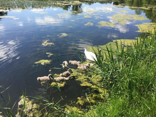 Templemore Park Fairy Trail