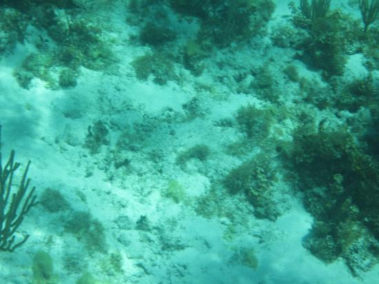 Cayman Ocean Adventures Stingray City & Snorkeling Tour: Snorkeling