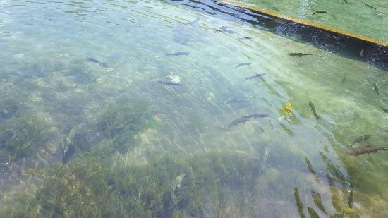Wizard Falls Fish Hatchery: 20160528_115608(0)_large.jpg