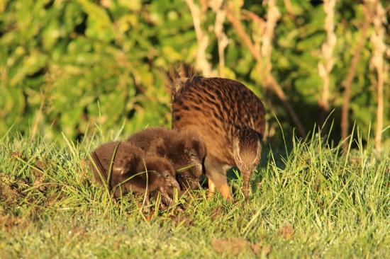 Birds Ferry Lodge: wildlife on your doorstep - Weka