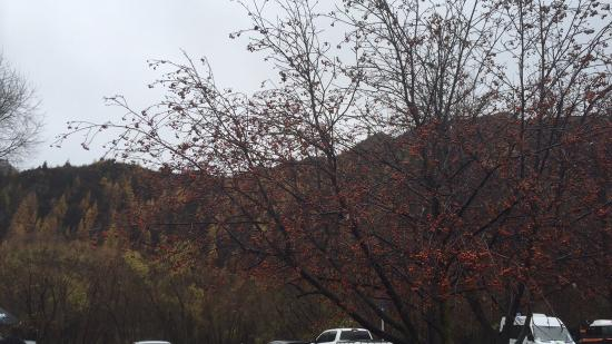 Arrowtown, Nueva Zelanda: photo4.jpg