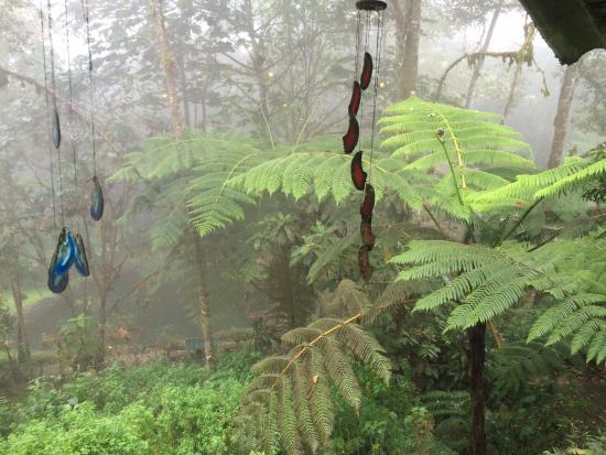 Sachatamia Lodge: rainforest from the restaurant