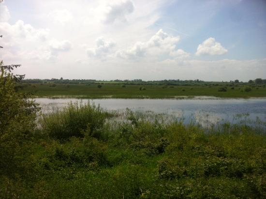Mallow, Ireland: View from the bird hide in summer