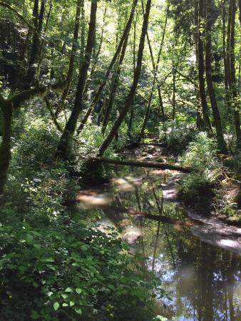Tryon Creek State Natural Area: photo6.jpg