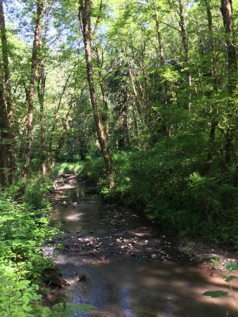 Tryon Creek State Natural Area: photo9.jpg