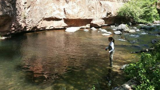 Oak creek brown picture of sedona fly fishing adventures for Arizona fly fishing