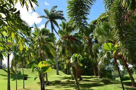 jardin tropical photo de habitation clement le francois tripadvisor. Black Bedroom Furniture Sets. Home Design Ideas
