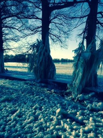 Tiptonville, เทนเนสซี: Winter 2015 snow/ice scene of Reelfoot Lake State Park