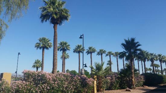 Litchfield Park, AZ: 20160527_074557_large.jpg