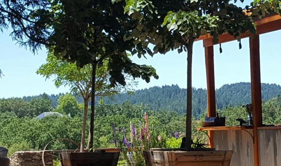 Forestville, CA: Russian River Vineyards & Restaurant view from the outdoor tasting area.